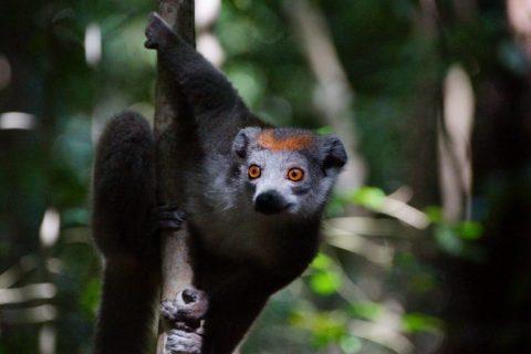 Vortrag Madagaskar